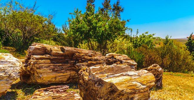 Τσέχοι έφυγαν από τη Λέσβο με κορμούς από το Απολιθωμένο Δάσος στις βαλίτσες τους