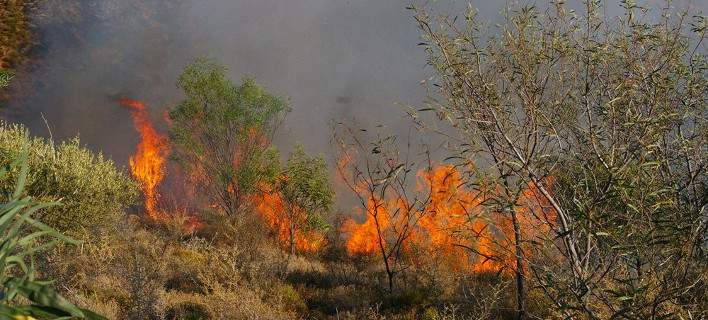 Υψηλός κίνδυνος πυρκαγιάς σήμερα στην Μαγνησία