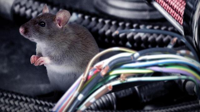 Ποντίκι άφησε χωρίς νερό 3 οικισμούς στην περιοχή της Αγχιάλου