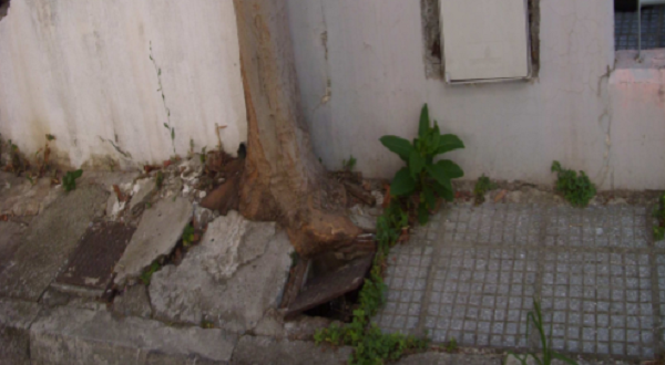 Κινδυνεύει να μείνει χωρίς νερό εξαιτίας ...ενός δέντρου!