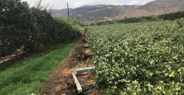 Ξεριζώθηκαν καλλιέργειες από την ανεμοθύελλα στον Τύρναβο [εικόνες]
