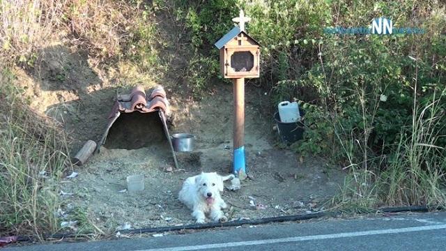 «Χάτσικο» στη Ναυπακτία: Σκυλος ζει 1,5 χρονο εκεί που σκοτώθηκε το αφεντικό του
