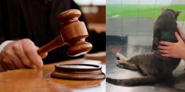 Φυλάκιση και πρόστιμο σε Λυκειάρχη που πυροβόλησε γάτα στη Λαμία