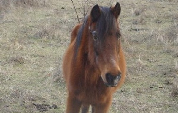 Αναπαύτηκε το ταλαιπωρημένο άλογο