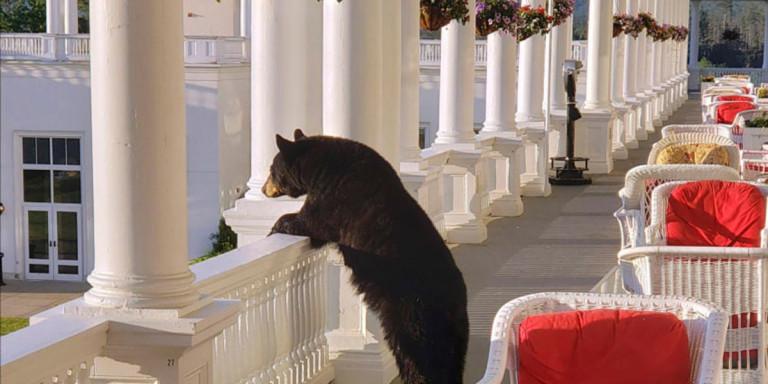 Απίστευτο θέαμα: Αρκούδα απολαμβάνει το ηλιοβασίλεμα από βεράντα ξενοδοχείου [εικόνες]