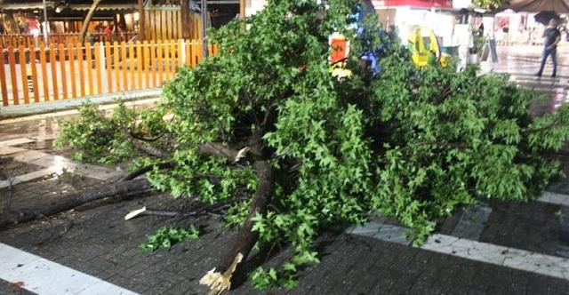 Έπεσε δέντρο στην πλατεία Ταχυδρομείου στη Λάρισα –Από θαύμα δεν υπήρξε τραυματισμός [εικόνες]