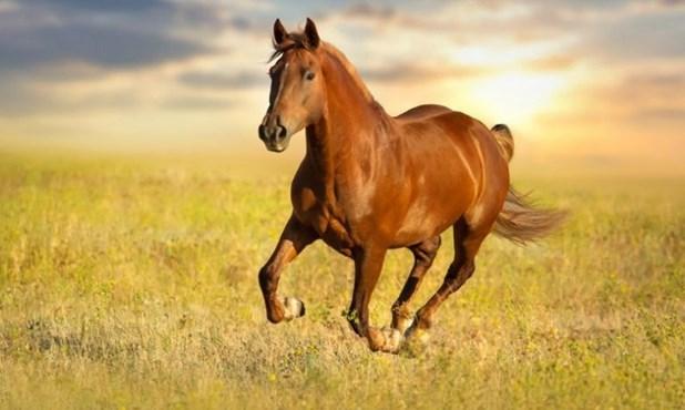Κρούσμα ιού του Δυτικού Νείλου σε άλογο στη Λάρισα –Μέτρα και στη Μαγνησία