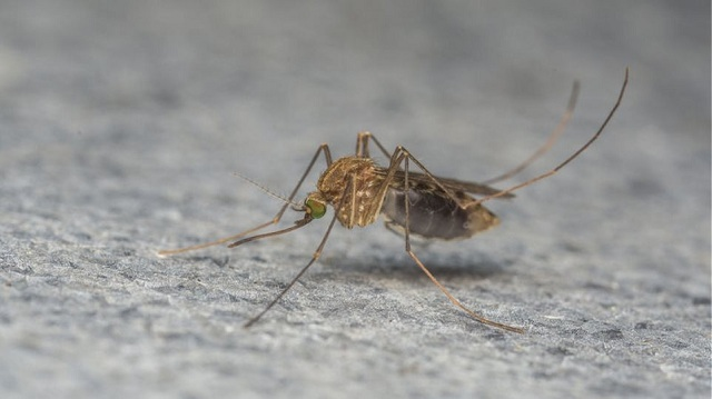 Κύπρος: Ένας νεκρός από τον ιό του Δυτικού Νείλου στα κατεχόμενα