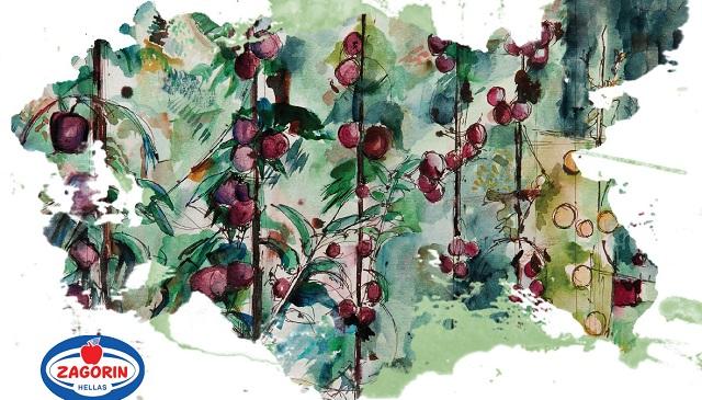 Εκθεση ζωγραφικής με θέμα το μήλο στην Ζαγορά