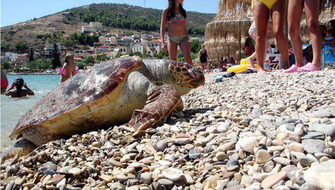 Μεθυσμένοι τουρίστες δεν άφηναν χελώνα να γεννήσει