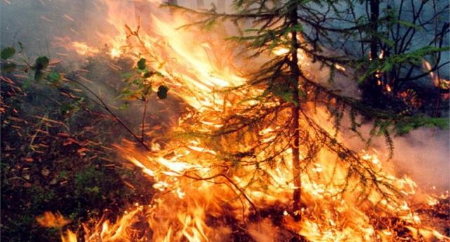 Σιβηρία: Οικολογική τραγωδία χωρίς τέλος –Μαίνονται σε 28.000.000 στρέμματα οι φωτιές