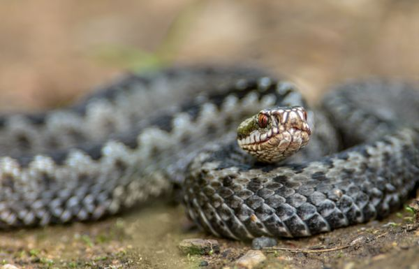 Φίδι έκανε βόλτα σε πιλοτή πολυκατοικίας στο Βόλο