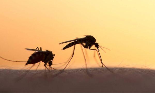 Στον «πόλεμο» με τα κουνούπια