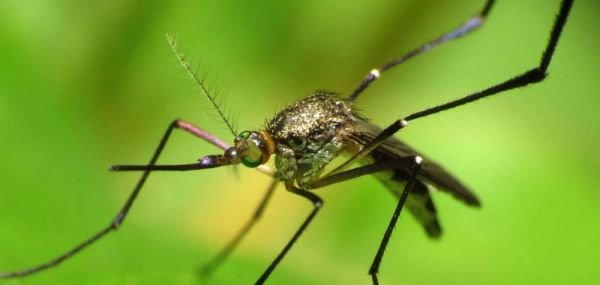Σε «πόλεμο» με τα κουνούπια η Περιφερειακή Ενότητα Μαγνησίας