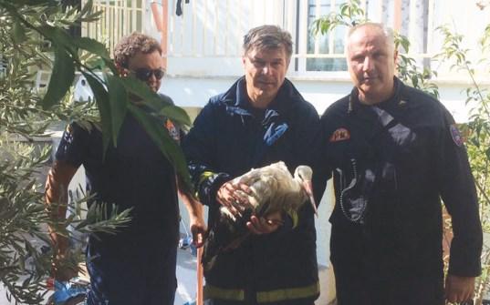 Αίσιο τέλος σε επιχείρηση διάσωσης πελαργού στα Μελισσάτικα, αλλά…