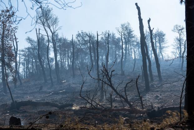 Σε ύφεση και οριοθετημένη η πυρκαγιά στην Εύβοια - Κάηκαν 23.565 στρέμματα