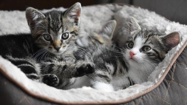 Μια αχτίδα ελπίδας για τους αλλεργικούς στις γάτες