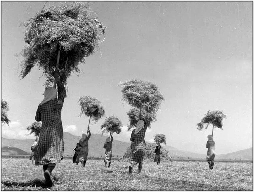Τάκης Τλούπας: Θεσσαλία