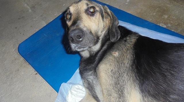 Εκκληση βοήθειας για τον Φόντα, τον συμπαθητικό σκύλο που παρέλυσε