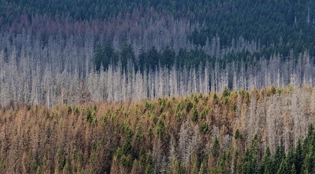 Γερμανία: Τεράστιες εκτάσεις δάσους καταστράφηκαν από την κλιματική αλλαγή
