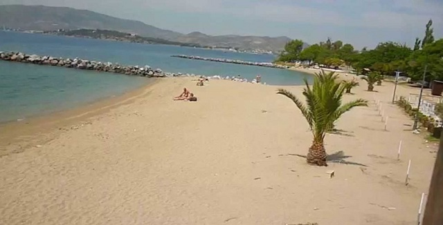 Επιθέσεις αδέσποτων σε λουόμενους στην παραλία του Αναύρου