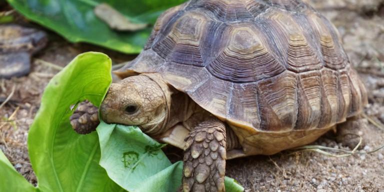 Κατασχέθηκαν πάνω από 4.000 χελώνες -Λαθρέμποροι τις είχαν βαφτίσει «λάχανα»
