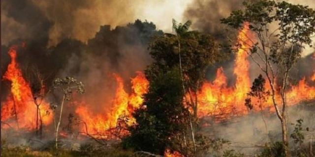 Αμαζόνιος: Οι φωτιές εξαφάνισαν φυλή αυτόχθονων που ανακαλύφθηκε πρόσφατα