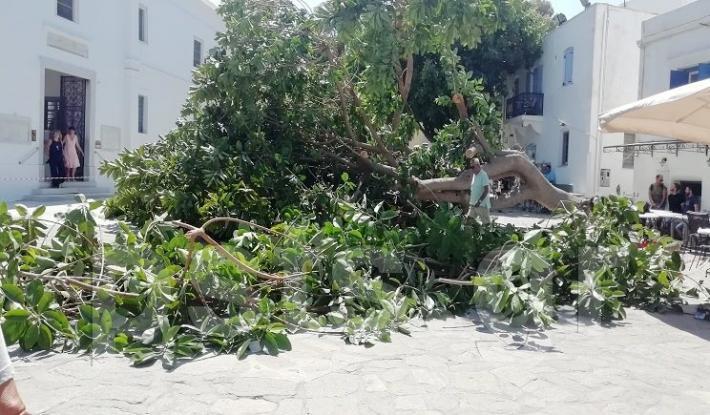 Πάρος: Δέντρο καταπλάκωσε άνδρα στην είσοδο της Εκατονταπυλιανής