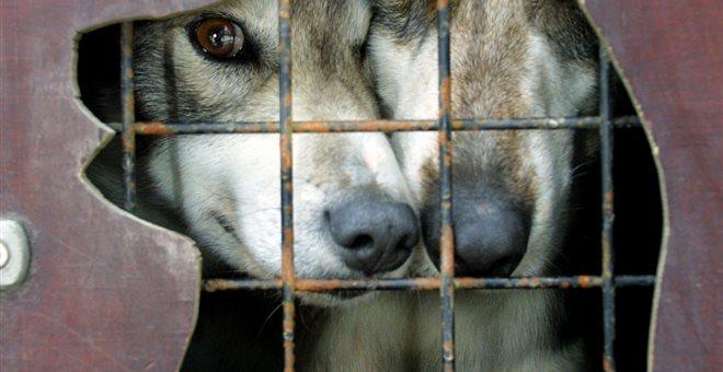 Νορβηγία: Μυστηριώδης ασθένεια πλήττει δεκάδες σκυλιά και προκαλεί πανικό
