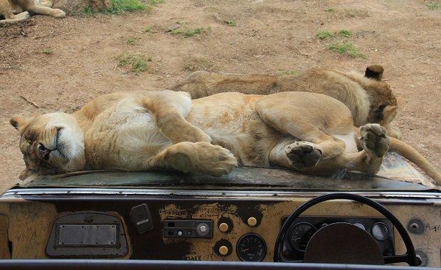 Τα 10 ζώα που δεν κοιμούνται ποτέ