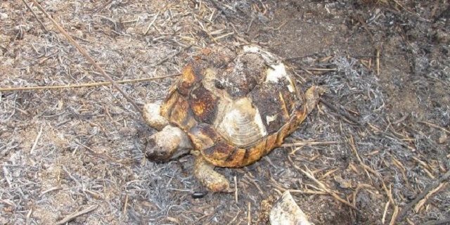 Πυρκαγιά έκαψε χελώνες στον υγρότοπο του Θερμαϊκού Κόλπου