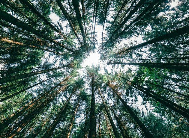 Τι θα συνέβαινε εάν εξαφανίζονταν ξαφνικά όλα τα δέντρα