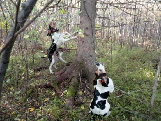 Σκύλοι Κουνχάουντ κατασπάραξαν την ιδιοκτήτριά τους