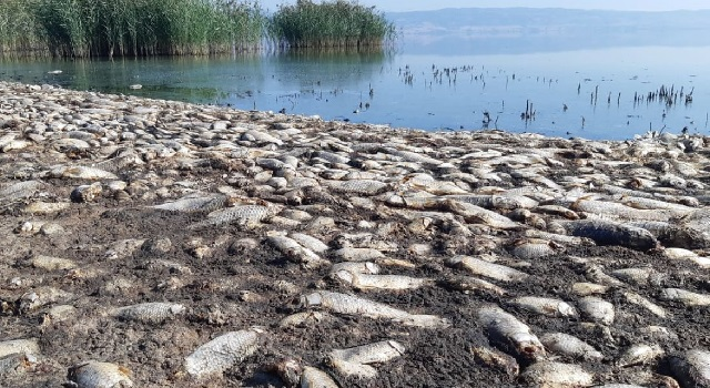 SOS εκπέμπει η λίμνη Κορώνεια για τα νεκρά ψάρια και τη χαμηλή στάθμη [εικόνες]