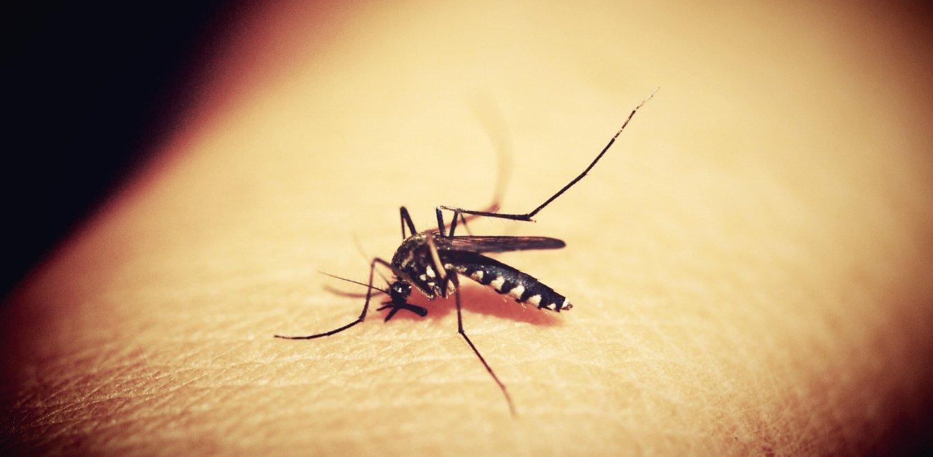 Σπάνιος και θανάσιμος ιός: Τον σκότωσε ένα κουνούπι αφού πρώτα τον άφησε εγκεφαλικά νεκρό