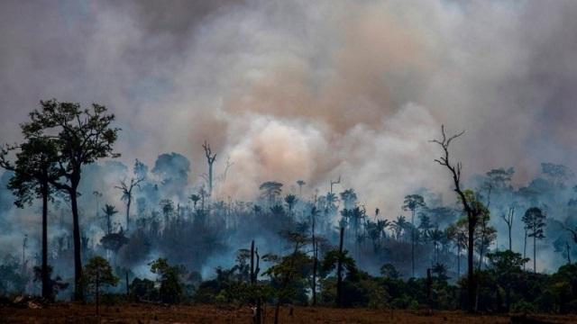 Πυρκαγιές στον Αμαζόνιο: Πέθαναν πάνω από 2,3 εκατομμύρια άγρια ζώα