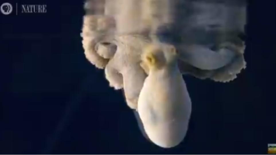 Εντυπωσιακό βίντεο : Χταπόδι ονειρεύεται και αλλάζει χρώμα