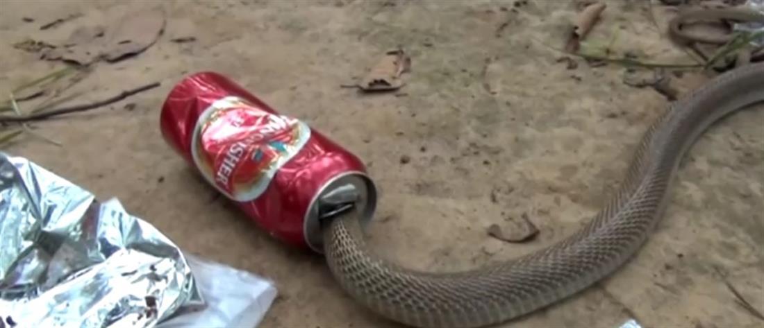 Διάσωση κόμπρας από… κουτάκι μπίρας
