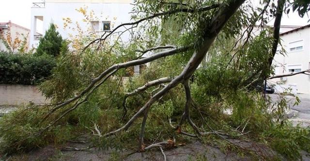 Έριξε δέντρα το ξαφνικό μπουρίνι στη Λάρισα