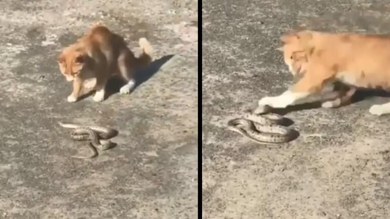 Γάτα vs φίδι