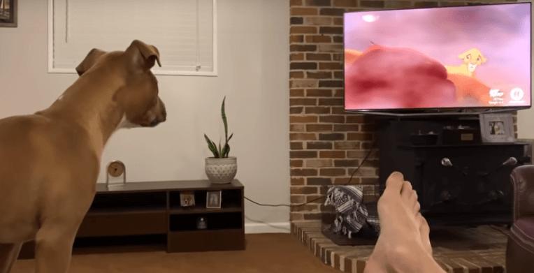 """Ένας σκύλος συγκινείται ενώ παρακολουθεί τον """"Βασιλιά των Λιονταριών"""""""