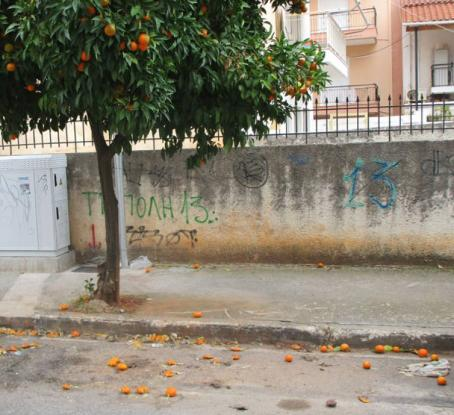 O δήμος Παπάγου - Χολαργού πλήρωσε εταιρεία 40.000 ευρώ για να μαζέψει τα νεράντζια