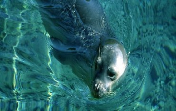 Προστασία της θαλάσσιας ζωής στην Αλόννησο
