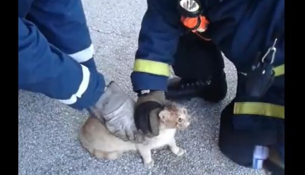 Ένα γατάκι έσωσαν Πυροσβέστες στον Βόλο