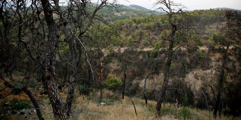 Τραγωδία στο δάσος της Στροφυλιάς: Δύο νεκροί μέσα σε λίγες ώρες