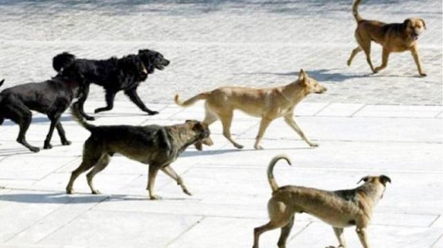 Μέτρα για τα αδέσποτα στον Δήμο Ζαγοράς - Μουρεσίου