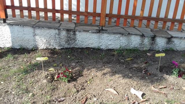 Μέλη του «Ηλιοτρόπιου» ομόρφυναν Παιδικούς Σταθμούς του Δήμου Βόλου