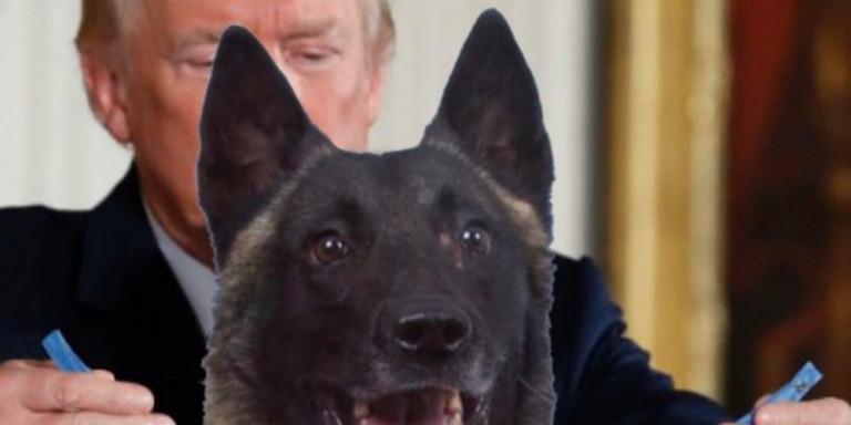To τερμάτισε ο Τραμπ στο Twitter: «Βράβευσε» σκύλο με μετάλλιο-πατουσάκι [εικόνα]
