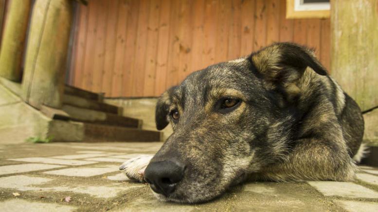 Υψηλά τα ποσοστά κακοποίησης ζώων στην Ελλάδα