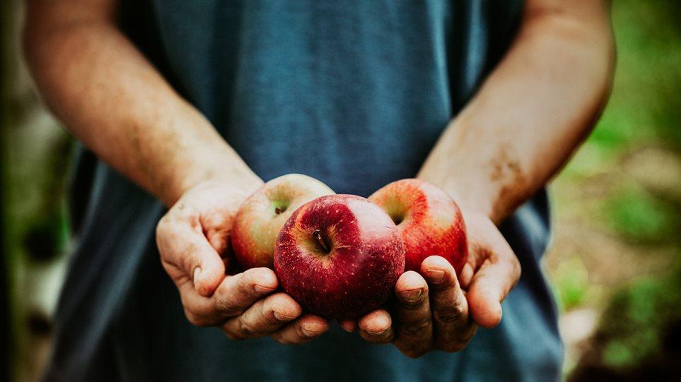 Το φρούτο που ρίχνει την χοληστερόλη, ρυθμίζει το έντερο και ενισχύει την άμυνα